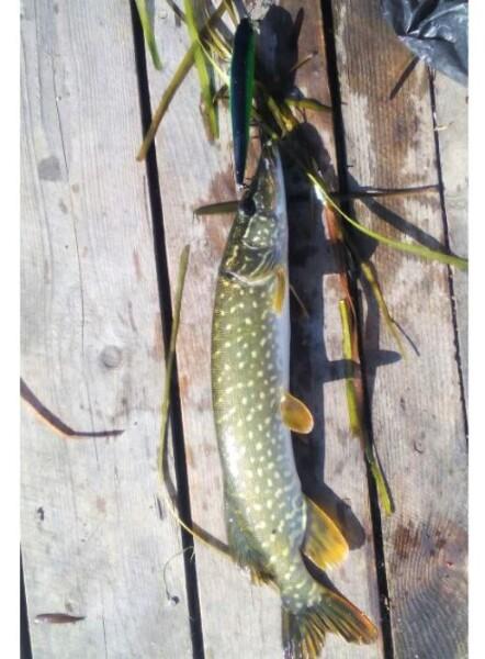 Bilde av Wobbel -14cm, 23g - Mange Farger