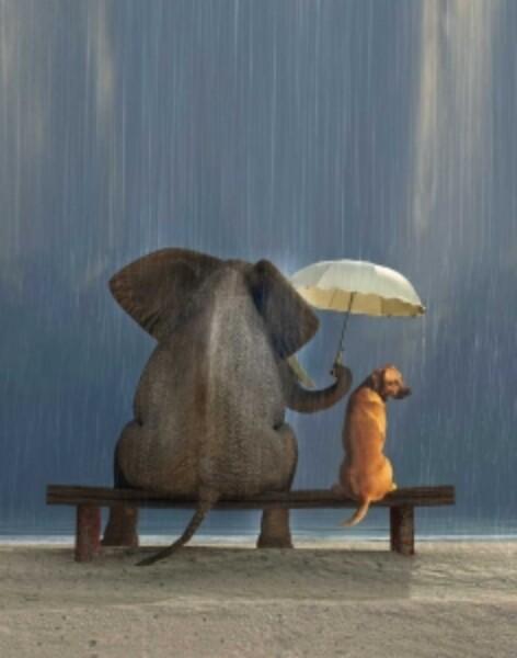 Bilde av Elefant og Hund Skrivebok