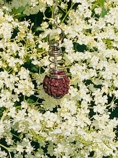 Bilde av Rudraksha silver pendel