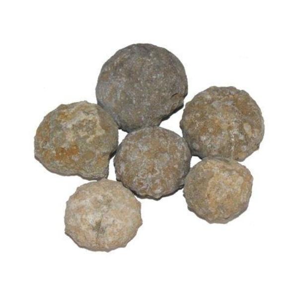 Bilde av Urchin Fossil