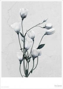 Bilde av Vee Speers Botanica Eustoma