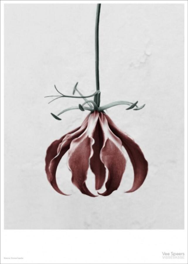 Vee Speers Botanica Gloriosa Superba kort 15x21