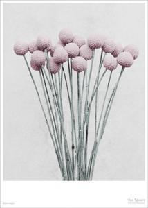 Bilde av Vee Speers Botanica Craspedia