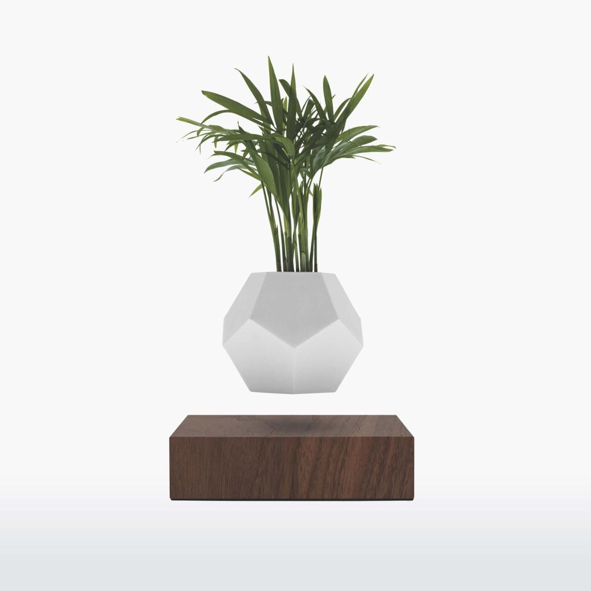 Flyte Lyfe planter walnut