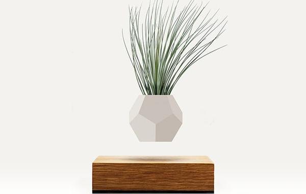 Bilde av Flyte Lyfe planter