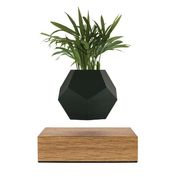 Bilde av Flyte Lyfe planter - Color