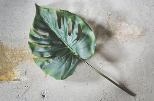 Bilde av Monstera blad 107 cm