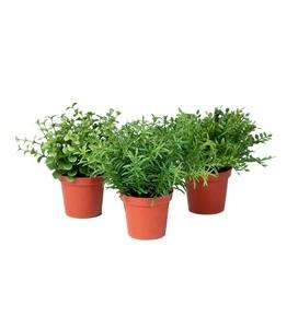 Bilde av Mini planter mix
