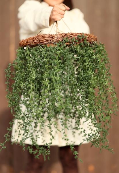 Bilde av Mr Plant - Lerkekrans hengende