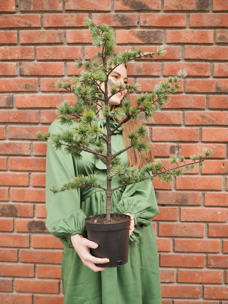 Bilde av Mr Plant - Lerketre - lite