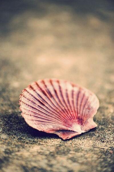 Bilde av Double Shell