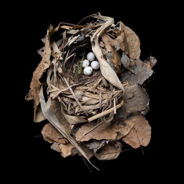 Bilde av Nest Study No6