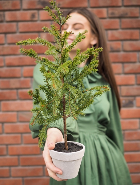 Bilde av Mr Plant - Lite Grantre - 45 cm